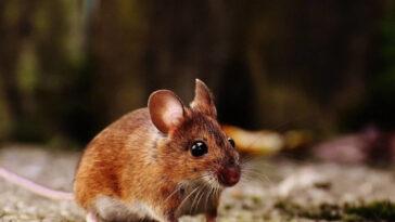 ποντικι ανεκδοτο,ανεκδοτο,ανέκδοτο,ανεκδοτο τησ ημερασ,ανεκδοτοσ