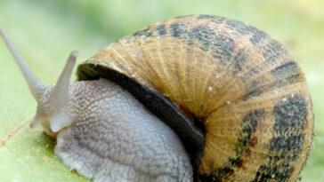 ανέκδοτο σαλιγκάρια,ανέκδοτο ,ανέκδοτο τησ ημέρασ,ανέκδοτο 2020