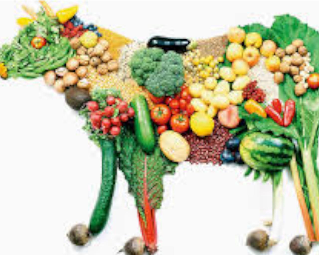 χορτοφαγοι,χορτοφαγοι διατροφολογοι,χορτοφαγοι στην ελλαδα,χορτοφαγοι δεινοσαυροι,χορτοφαγοι κατηγοριεσ,χορτοφαγοι vs κρεατοφαγοι,χορτοφαγοι μειονεκτηματα,χορτοφαγοι γιατροι,χορτοφαγοι τι τρωνε