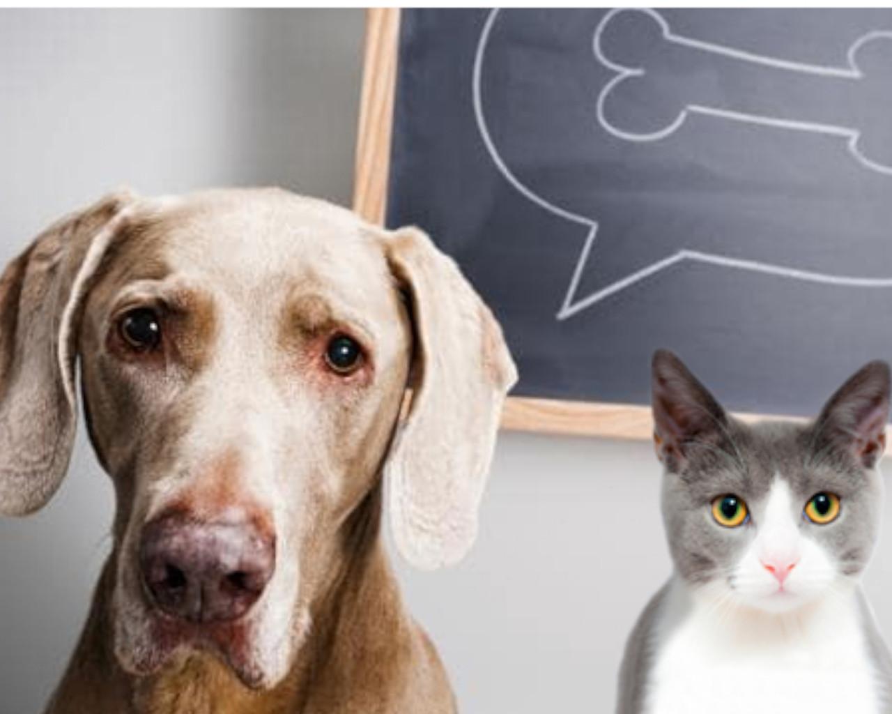 γατα ενταντιον σκυλου,γατα και σκυλος,γατα και σκυλος μαζι,γατα σκυλος κι ενα αρνι πορτρετα σε μια γκαλερι,η γατα και ο σκυλος τραγουδι,γατα σκυλοσ διαφορεσ,γατα και σκυλος ονειροκριτης,γατα και σκυλοσ συμβιωση
