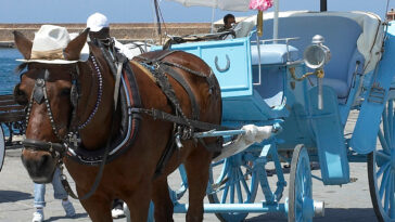 άλογο,άλογο τιμή,άλογο αχάλ-τέκε,άλογο μάστανγκ,άλογο ονειροκριτησ,άλογο ιππασίασ,άλογο ετυμολογία,άλογοσ